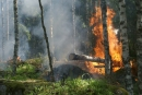 Foc al bosc
